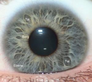 Irisschaut auf Blatt mit Tropfen - Seminare Vistara Haiduk - Irisdiagnose II Irisinterpretation