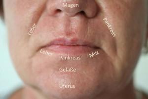 Seminare Vistara Haiduk - Gesichtsdiagnose Pathophysiognomie Huter Feronato